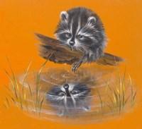 Reflective Racoon - 35A Fine-Art Print