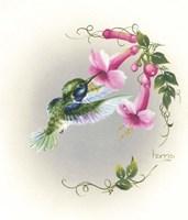 Hummingbird With Trumpet Flowers 2 Fine-Art Print