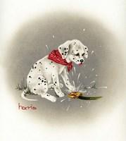 Dalmation 3- Sprinkles Fine-Art Print