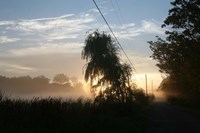 Willows Morning Road Fine-Art Print