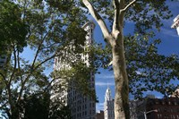 Flatiron Building With Trees Fine-Art Print