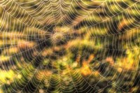 Morning Web Fine-Art Print