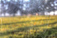 Paddock Web Fine-Art Print