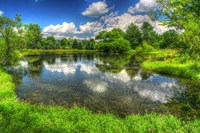 Summer Pond Fine-Art Print