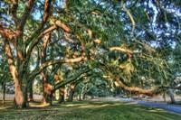 Jeckel Island Treeline Fine-Art Print