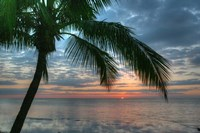 Key West Sunrise One Palm Fine-Art Print