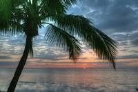Key West Sunrise One Palm Fine-Art Print