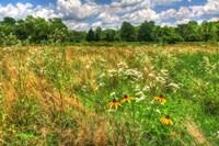 Late Summer Meadow Fine-Art Print