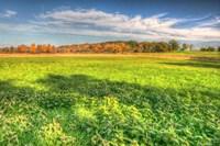 Meadow Early Autumn Fine-Art Print