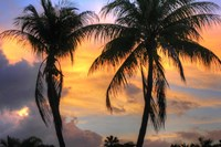 Key West Two Palm Sunrise Fine-Art Print