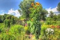 Sunflowers and Garden Fine-Art Print
