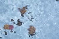 Frozen 1 Fine-Art Print