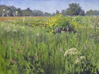 Summer Meadows Fine-Art Print