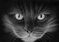 Hypno Cat Fine-Art Print