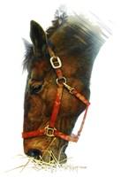 Equestian Fine-Art Print