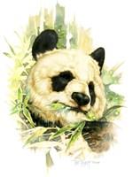 Panda Fine-Art Print