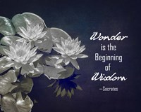 Wonder is the Beginning of Wisdom Water Lily Black and White Fine-Art Print