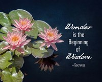 Wonder is the Beginning of Wisdom Water Lily Color Fine-Art Print