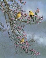 Gold Finches Fine-Art Print