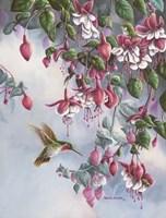 Broadtail And Fuschia Fine-Art Print
