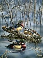 Misty Woodducks Fine-Art Print