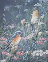 Bluebird And Wildflowers Fine-Art Print
