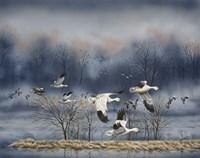 Misty Flight Fine-Art Print