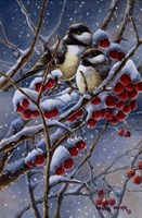 Winter Chickadees And Berries Fine-Art Print