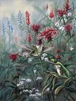 Monardia Fine-Art Print