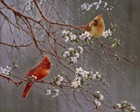 Spring Glory Fine-Art Print