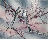 Spring Scissortail Fine-Art Print