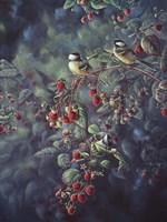 Red Raspberries And Chickadees Fine-Art Print