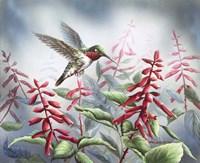 Summer Hummingbird Fine-Art Print