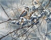 Winter Perch Fine-Art Print
