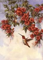 Hummingbird E Fine-Art Print