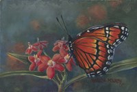 Monarch Fine-Art Print
