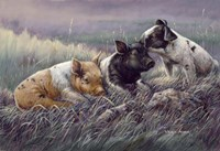 Three Little Pigs Fine-Art Print