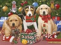 Which One's Mine - Xmas Puppies Fine-Art Print