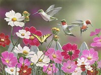 Cosmos and Hummingbirds Fine-Art Print