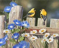 Morning Glories and Finches Fine-Art Print
