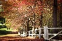 Autumn Moods Fine-Art Print