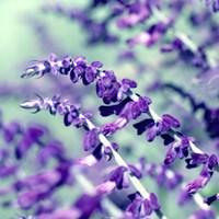 BC Pretty In Purple Fine-Art Print