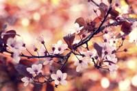 Colours Of Springtime Fine-Art Print