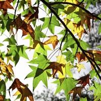 First Signs Of Autumn Fine-Art Print
