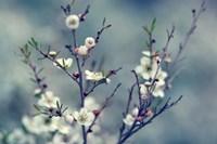Spring Impressions Fine-Art Print