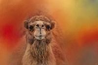 Dromedary Camel Fine-Art Print