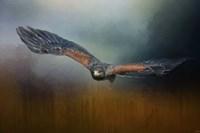 Flight Of The Harris Hawk Fine-Art Print