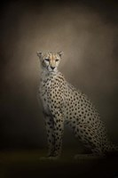 The Elegant Cheetah Fine-Art Print