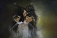 Calico Stare Fine-Art Print