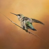 Hummingbird On Peach Fine-Art Print